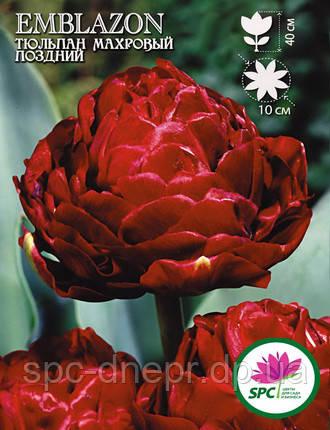 Тюльпан махровый поздний Emblazon