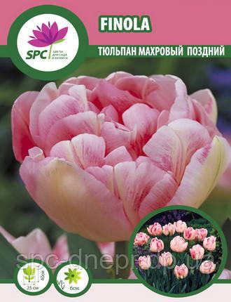 Тюльпан махровый поздний Finola, фото 2