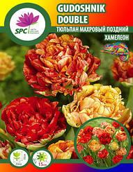 Тюльпан махровый поздний Gudoshnik Double