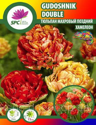 Тюльпан махровый поздний Gudoshnik Double, фото 2