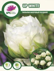 Тюльпан махровый поздний Up White