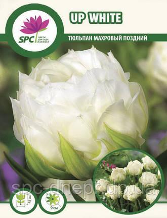 Тюльпан махровый поздний Up White, фото 2