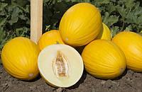 АГАСИ F1 /  AGASI F1 — Дыня, Kitano Seeds, 1000 семян