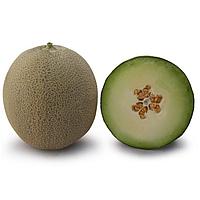 КС 7044 F1 /  KS 7044 F1 — Дыня, Kitano Seeds 1000 семян