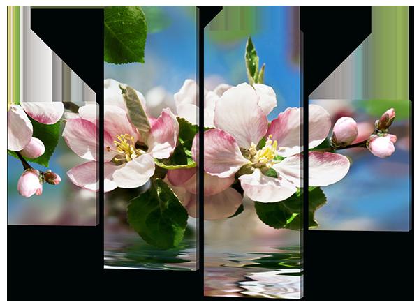 Соцветие вишни