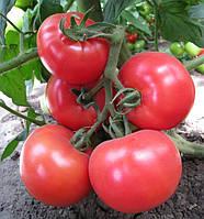 КС 14 F1 / KS 14 F1 — томат индетерминантный, KitanoSeeds 500 семян