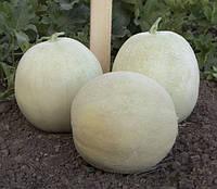 МИРА F1 (КС 7037 F1) / MIRA F1 (KS 7037 F1) — Дыня, Kitano Seeds, 1 000 семян