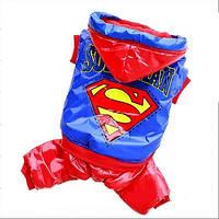 Комбинезон для собак SuperMan. Одежда для собак.