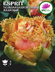 Тюльпан махровый бахромчатый Esprit