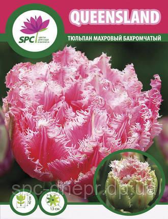 Тюльпан махровый бахромчатый Queensland, фото 2