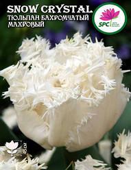 Тюльпан махровый бахромчатый Snow Cristal