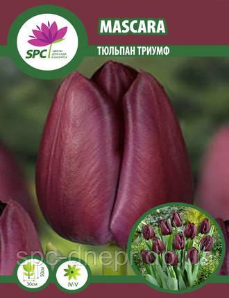 Тюльпан триумф Mascara, фото 2