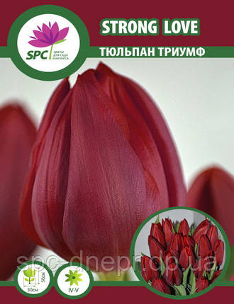 Тюльпан триумф Strong Love, фото 2