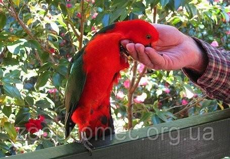 Как выбрать попугая?Какой вид попугаев лучше купить?