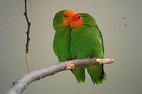 Как правильно кормить попугая?Основы правильного кормления.