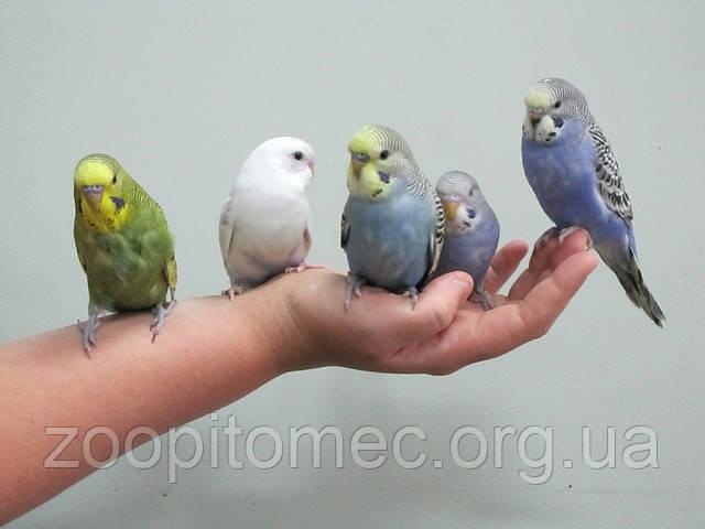 Словарь имен попугаев.
