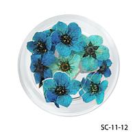 Сухоцветы голубого цвета в баночках. SC-11-12
