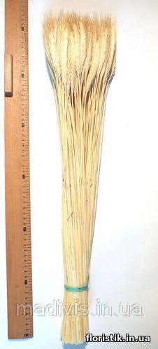 Колоски декоративные, натуральный цвет, 115 шт.