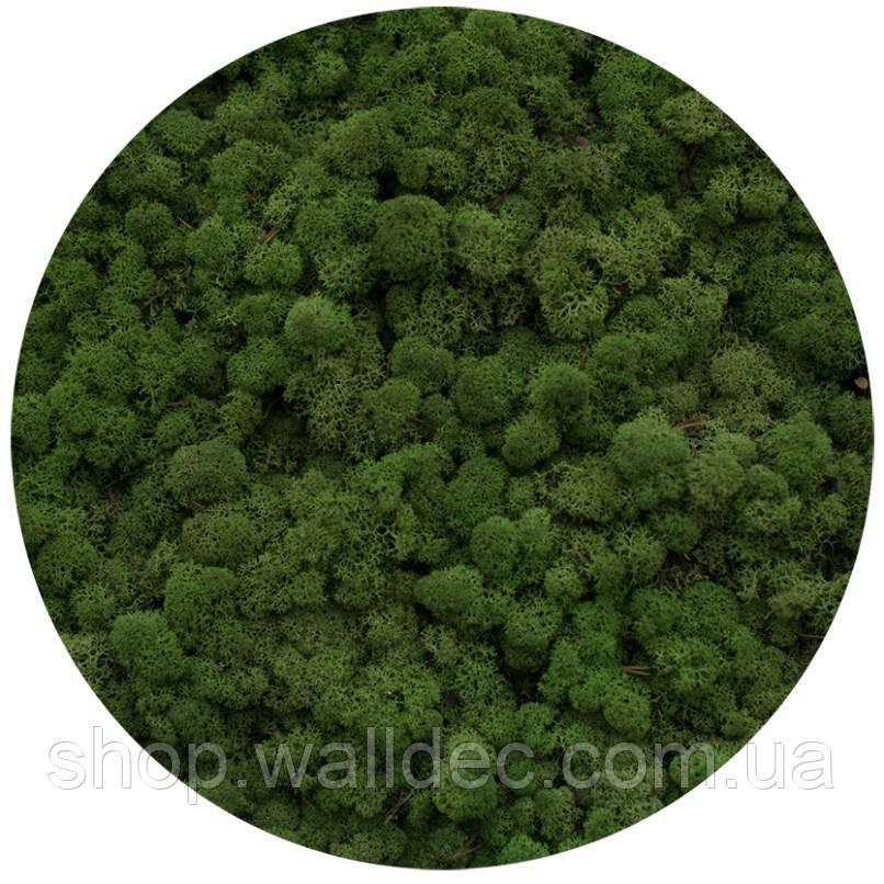 Мох ягель Medium Green