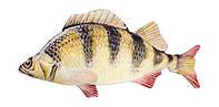 Мягкая игрушка антистресс Рыба Окунь