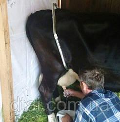 Антибрык для фиксации коров по выгодной цене Нидерланды