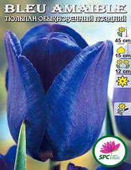 Тюльпан обыкновенный поздний Bleu Amaible