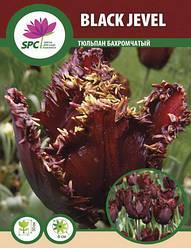 Тюльпан Black Jewel