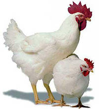 Линии обработки и упаковки куриного мяса