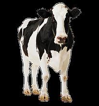 Скотобойни для крупного рогатого скота