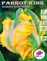 Тюльпан Parrot King
