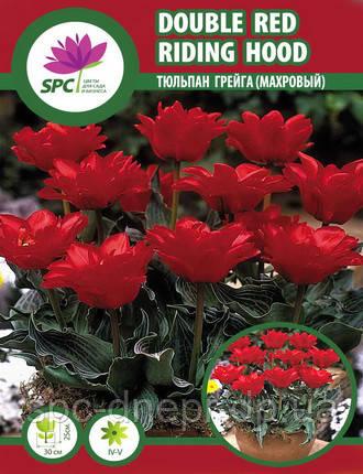 Тюльпан Double red Riding Hood, фото 2