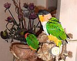 Черноголовый белобрюхий попугай (Каик) Pionites melanocephala, фото 7