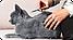 Бродлайн (Broadline) Спот-Он от внутренних и внешних паразитов для котов весом 2,5-7,5 кг, цена за 1 пипетку, фото 2