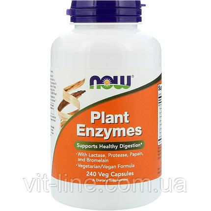 Now Foods, Растительные энзимы, 240 растительных капсул, фото 2