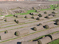 Рулоный газон, фото 1