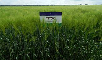 Семена озимого ячменя Титус LEMBKE сертификат на семена