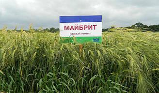 Семена озимого ячменя Майбрид сертификат на семена