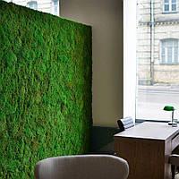 Стеновые панели из плоского мха