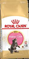 Royal Canin Maine Coon Kitten 4 кг сухой корм для котят породы мейн-кун до 15 месяцев