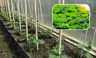 Как бороться со мхом и водорослями на участке - средства и способы