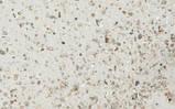 Versele-Laga PRESTIGE Premium Marine пісок з морських раковин для птахів (Бельгія) 5кг, фото 2