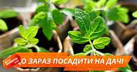 Что можно посадить на своем огороде в июне, чтобы получить богатый урожай