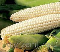 Семена сахарной кукурузы Белая королева