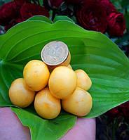 Саженцы черешни Дачница (Украина)