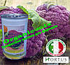 Капуста цветная пурпурная (фиолетовая) сицилийская, ТМ Hortus (Италия), банка 500 грамм
