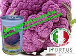 Капуста цветная пурпурная (фиолетовая) сицилийская, ТМ Hortus (Италия), банка 500 грамм, фото 2