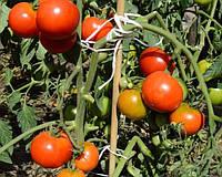 "Подготовка ""теплых грядок"" для ранних помидор"
