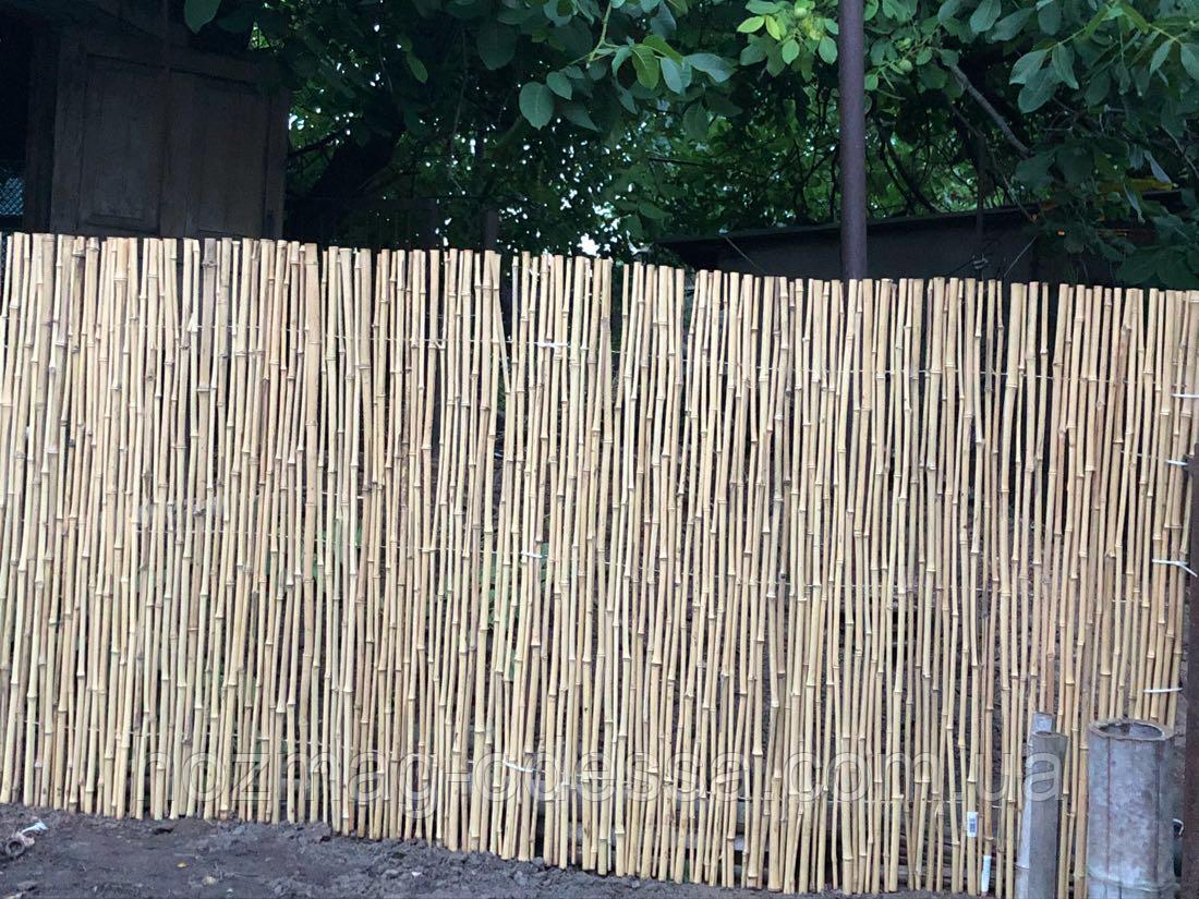 Бамбуковый забор,1,0м * 6,0м УЦЕНКА! только самовывоз!