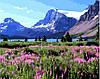 Картина по номерам 40х50 Альпийские луга (GX8585)
