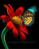 Картина по номерам 40х50 Бабочка на красном цветке (GX21524)